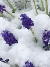 wiosna??