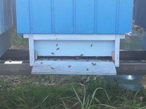 pszczoły i ul