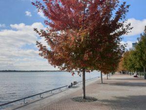 jezioro Lake Ontario